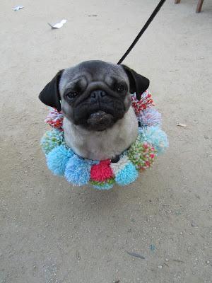 perro con pompones