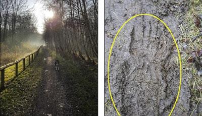 Misteri Penemuan Jejak Kaki Yang Mirip Manusia Di Hutan