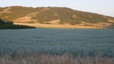crop, Eagle Butte, Alberta, Cypress Hills, landscape, agriculture