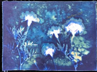 Wet Cyanotype_Sue Reno_Image 187