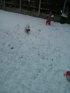 throwing snow with the dog