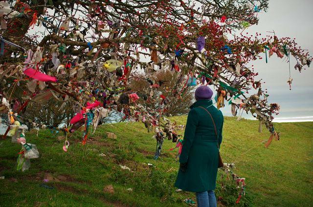 Hawthorn Tree at the Hill of Tara, Ireland, Hawthorn folklore