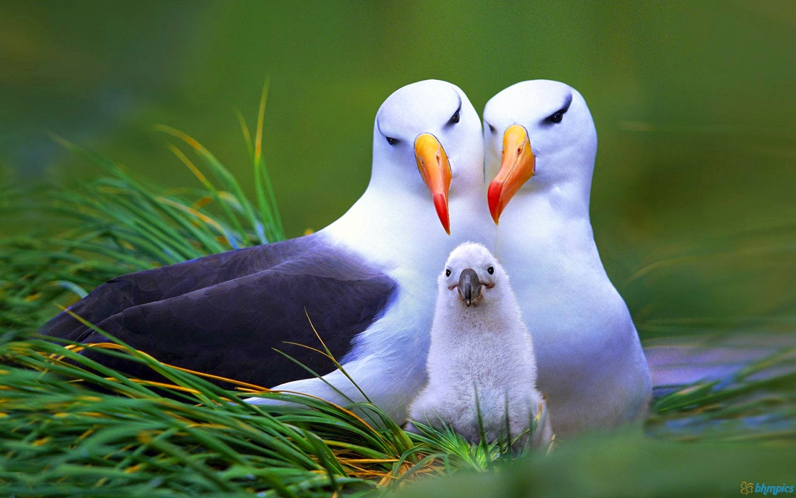 Animal Pic, Cute birds pic, Lovely birds pic
