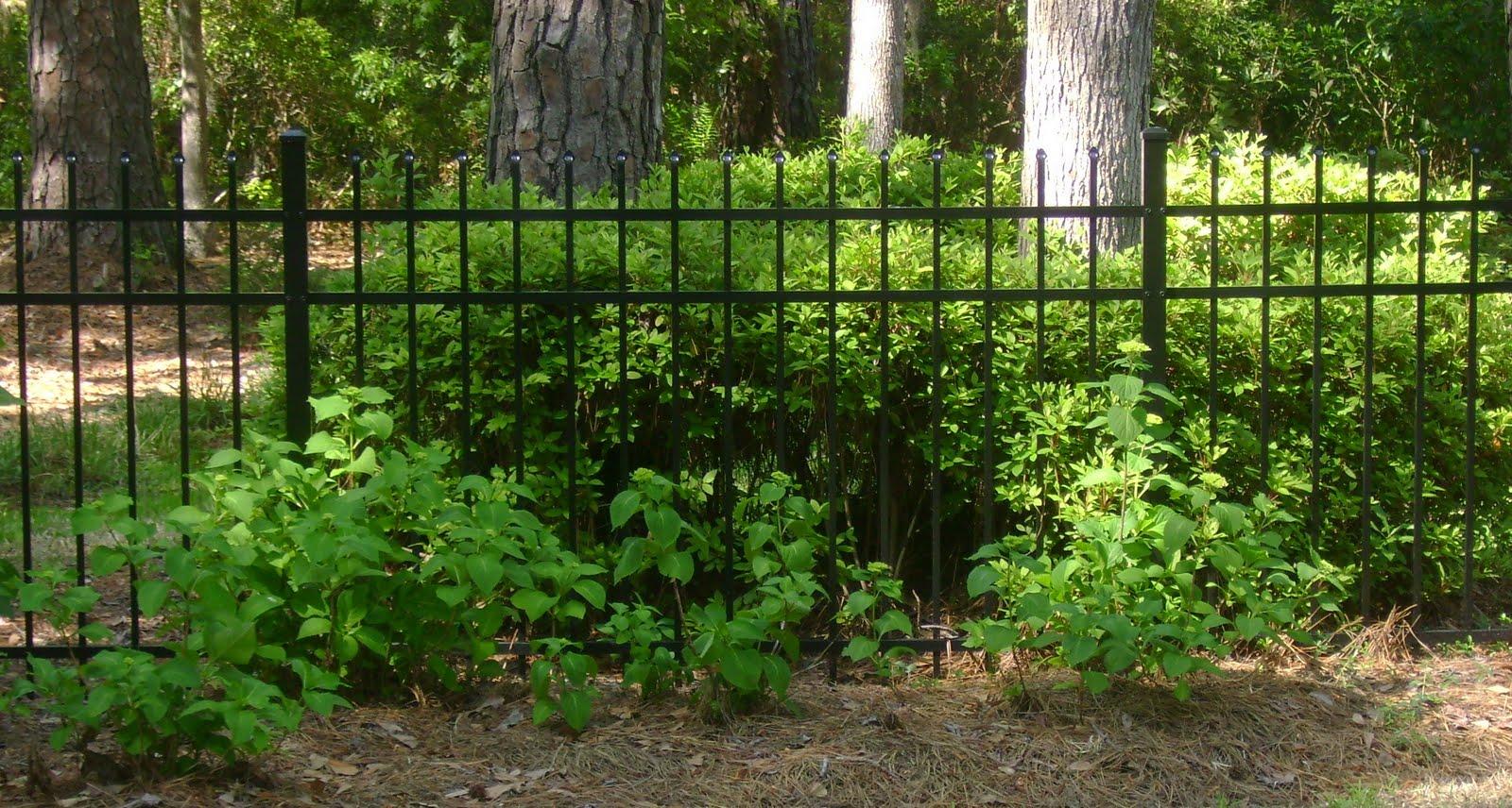 SAVANNAH GRANNY: Vintage Garden?