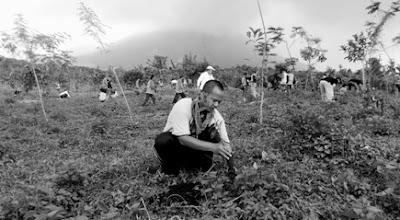kenduri pohon gunung lemongan 2016