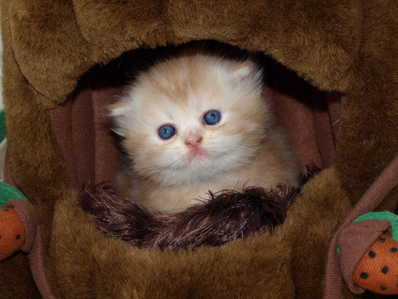 Gambar Kucing El Dan Lucu Majalah Cat & Dog