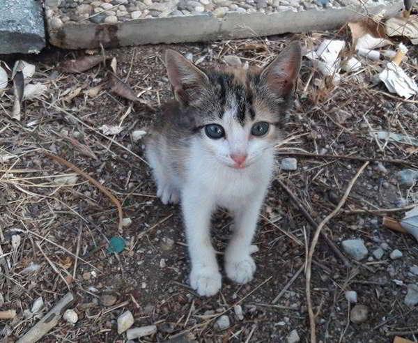 adopción gratuita de gatita
