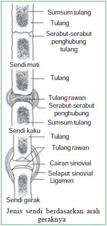 Jenis sendi berdasarkan arah geraknya