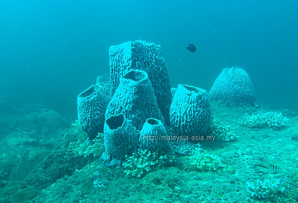 Miri Diving