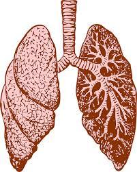 Penyebab Penyakit Batuk, Bronkitis Dan Paru-paru Yang Jarang Diketahui