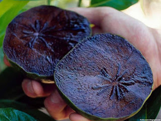 Black sapote fruit images wallpaper