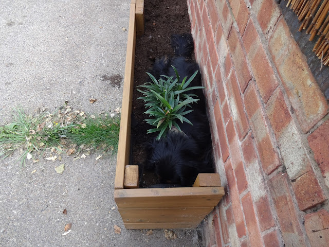 Dog Hiding in Flower Bed