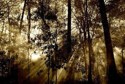 Δασική έκταση, Χαρακτηριστικά γνωρίσματα δάσους και δασικής εκτάσεως.