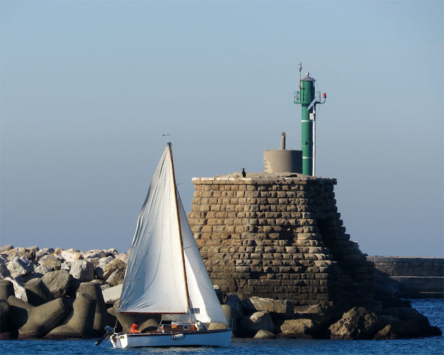 Sailboat and cormorant, Vegliaia breakwater, Livorno