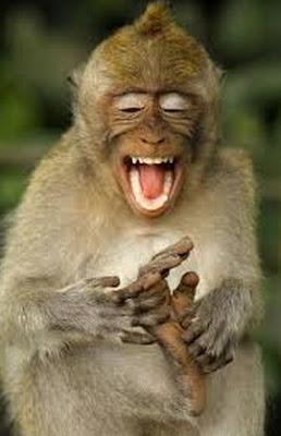 monyet kesakitan lucu