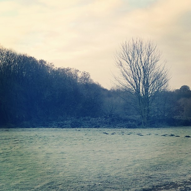 The Gallery : Health And Fitness - Frosty morning on Witton Park, Blackburn