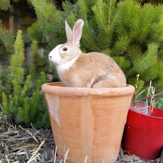 A large terracotta pot has a bunny (the same orange colour as the pot) sitting where a plant would normally be growing.  It looks like the bunny is growing out of the pot as if it were a plant.
