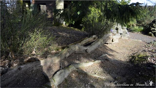 Totholz, Stamm, Baum