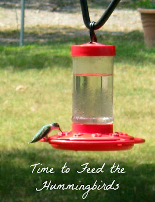 Time to feed the hummingbirds. Here's what you need to know. | LifeInOut.com
