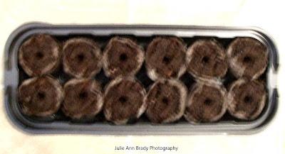 Jiffy Windowsill Greenhouse Steps 2-3