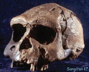 Penemuan Penting Fosil Manusia Purba di Beberapa Tempat di Indonesia