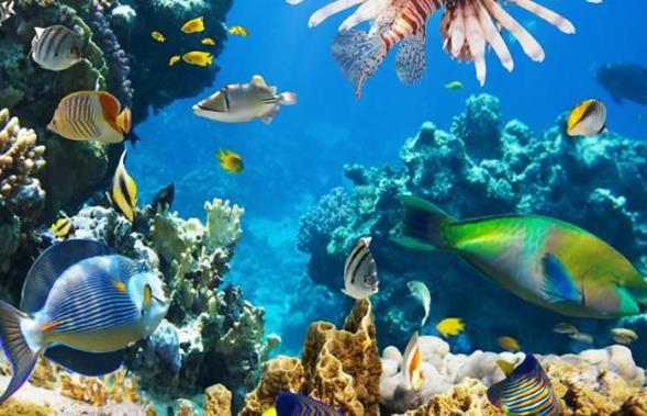 conservacion de los oceanos