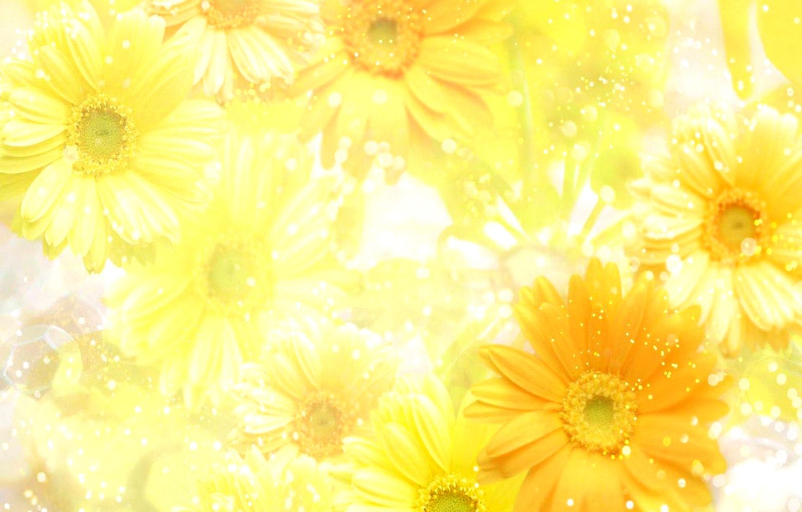 Yellow Spring Flowers Background   Laptop Wallpapers