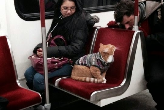cat in subway toronto