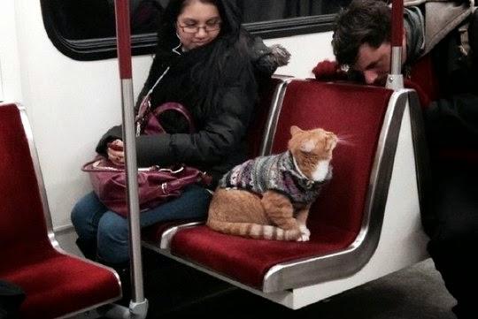 cat in subway toronto