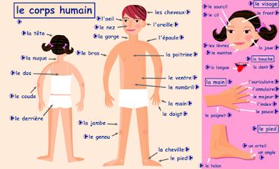 Resultado de imagen de le corps humain fle