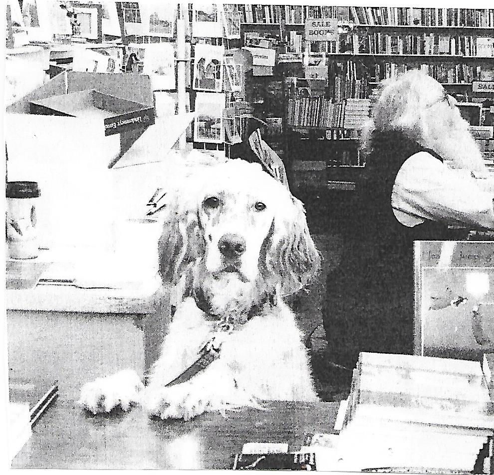 Bookstore Dogs