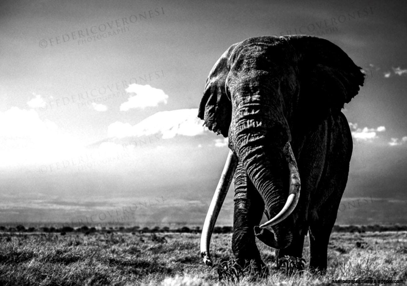 elephant wallpapers amazing
