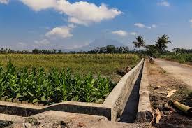 "Dua Hektare Lahan Pertanian Disapu  Aliran Sungai Batang Piaman Ketek Kades Ansharuddin :""Terjadi Sejak Sepuluh Tahun Terakhir"""
