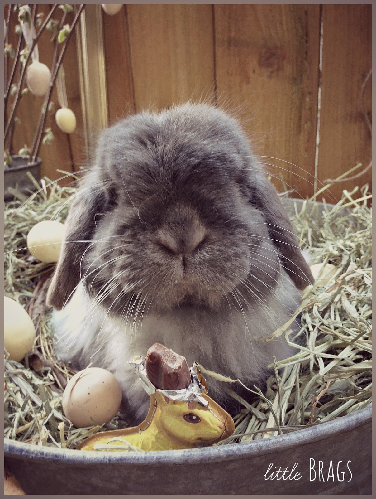 Little Brags: Serious Cuteness Alert -- The Real Easter Bunny