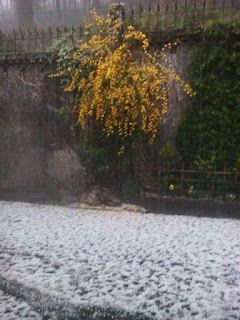 Historic and horrific Hailstone hits Darjeeling 13