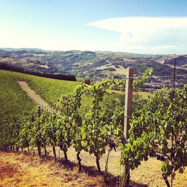 sangiovese of Romagna