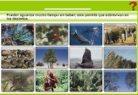 http://www.ceipjuanherreraalcausa.es/Recursosdidacticos/SEXTO/datos/02_Cono/datos/05rdi/04/01.htm
