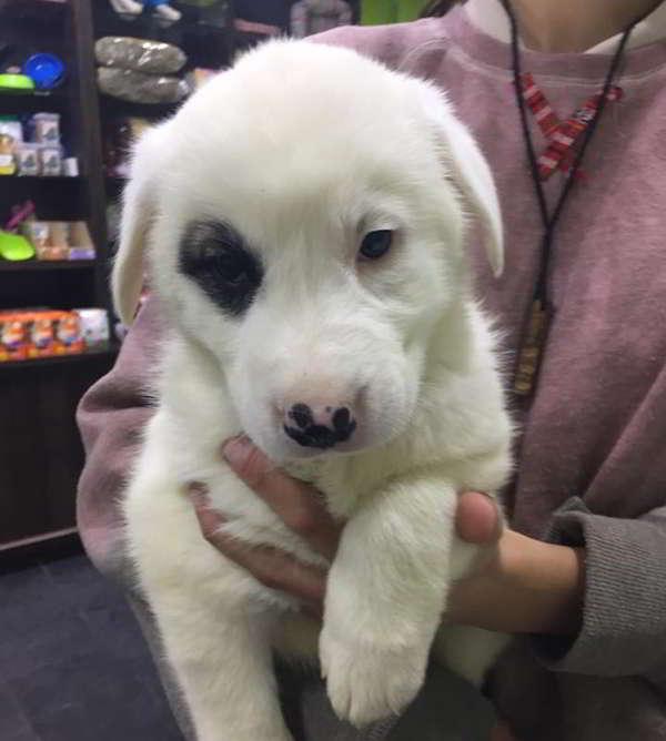 cachorro talla grande 1