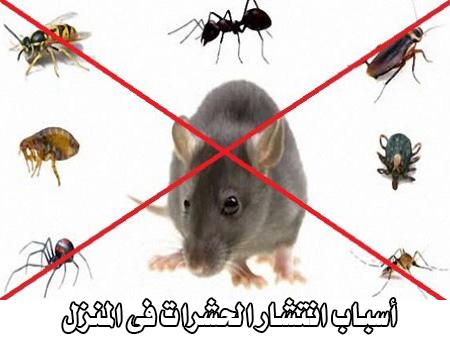 اسباب انتشار الحشرات فى المنزل