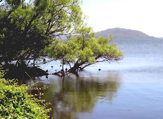 Lake Rotorua / New Zealand     ロトルア湖 ニュージーランド
