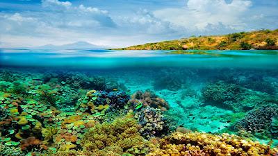 Papel de parede grátis, fotos e imagens da natureza para pc, notebook, celular, iphone e table em hd : Cenário Subaquático.