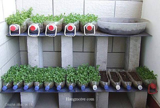 Một góc bố trí khác sử dụng chai nhựa bỏ đi để trồng rau xanh