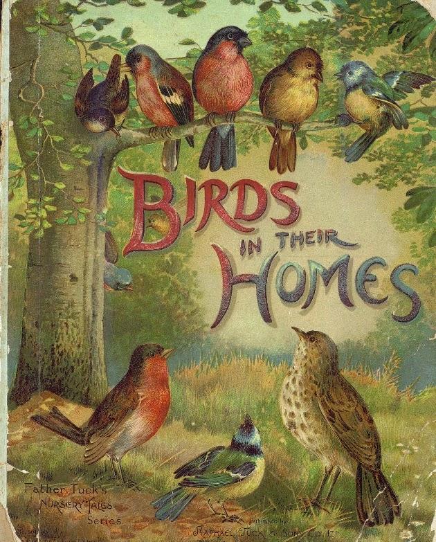 Libro de ilustraciones aves