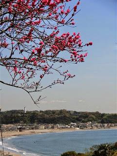 鎌倉成就院の桃