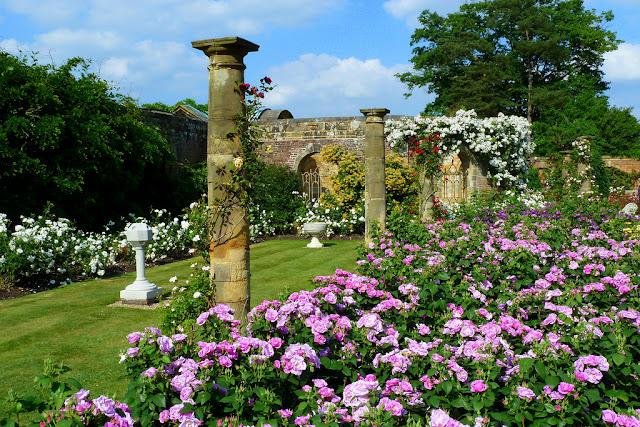 розы сад замок руины
