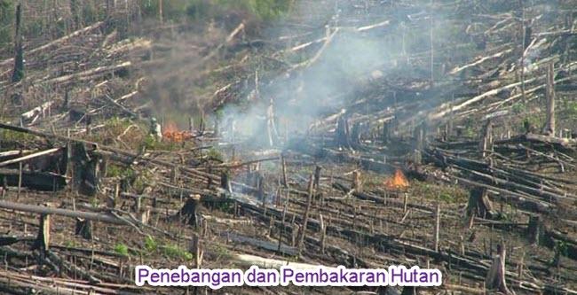 Penebangan Hutan Indonesia