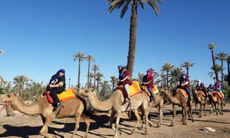 Camel Ride Marrakesh city