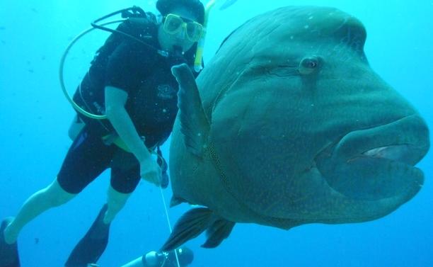 ikan unik yang terancam punah