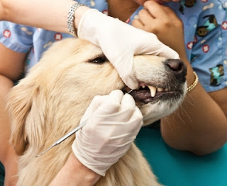 5 Tips for Healthy Dog Teeth and Gums