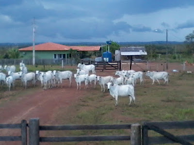 vende fazendas